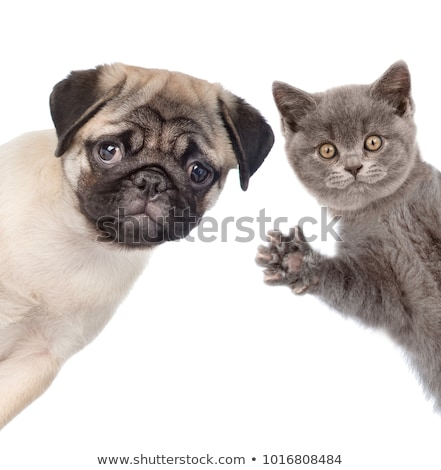 two dog with a message Stock photo © willeecole