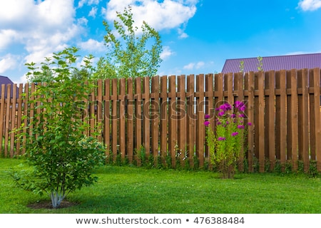 tree on green lawn with wooden fence Stock photo © LoopAll