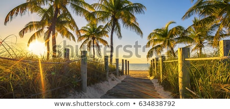 Passage to the beach at sunrise Stock photo © vwalakte