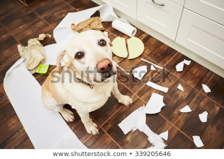 eenzaam · triest · puppy · gebarsten · grond · hond - stockfoto © stephanie_zieber