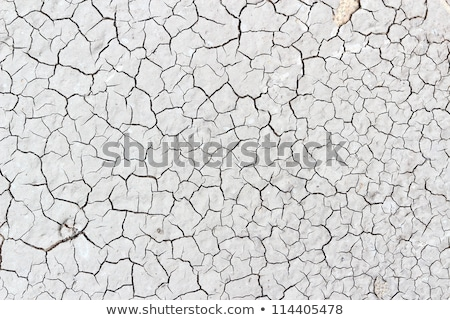 Dry Cracked Soil with Stones and Branches. Stock photo © tashatuvango