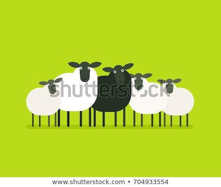 黒 · 顔 · 羊 · 1 · 母親 · 子羊 - ストックフォト © juniart