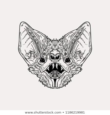 Stock fotó: Denevér · fej · vektor · állat · illusztráció · póló