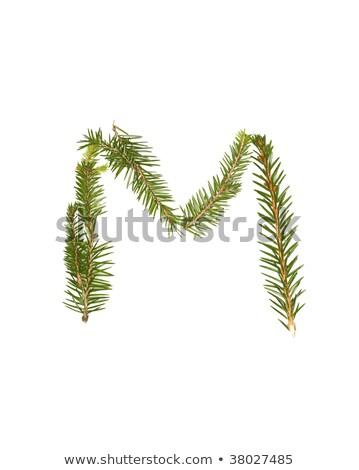 Ladin mektup m yalıtılmış beyaz ağaç kış Stok fotoğraf © gemenacom