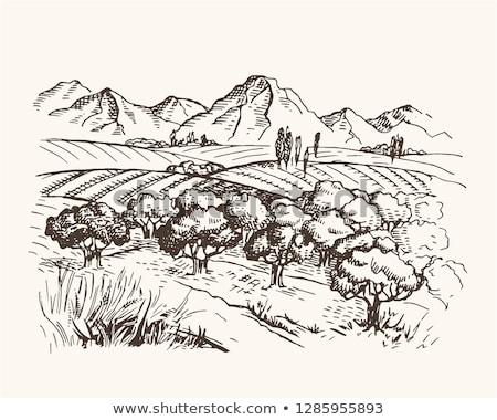geometric tree landscape of a countryside Stock photo © teerawit