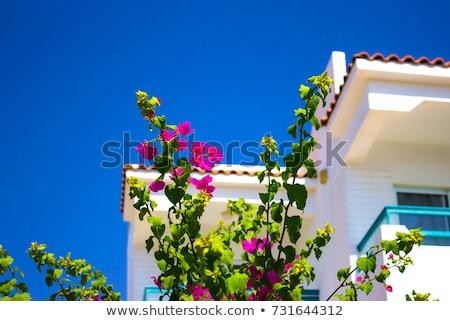 Fehér homlokzat épület Egyiptom kicsi oldalnézet Stock fotó © master1305