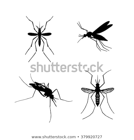 set of black silhouette carrier mosquitoes isolated on white bac stock photo © jiaking1