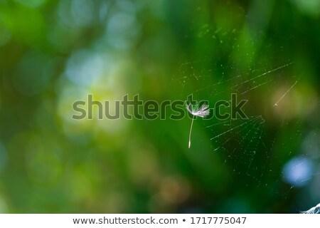 örümcek · çiçek · avcılık · ıslak · yaz · damla - stok fotoğraf © oleksandro