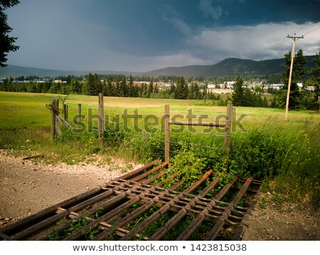 Cow passing an open gate Stock photo © olandsfokus