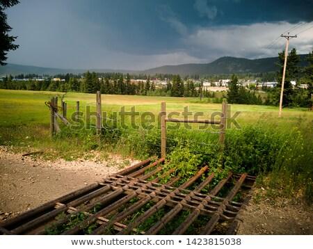 koe · Open · poort · oude · houten · bos - stockfoto © olandsfokus