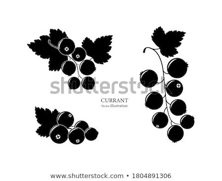 Siyah frenk üzümü ikon doğa dizayn imzalamak Stok fotoğraf © angelp
