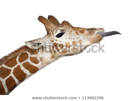 Yan profil iki zürafalar park Güney Afrika Stok fotoğraf © simoneeman
