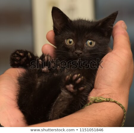 noir · kitty · portrait · Nice · faible - photo stock © cosma