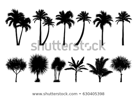 set of palm tree silhouettes Stock photo © LoopAll