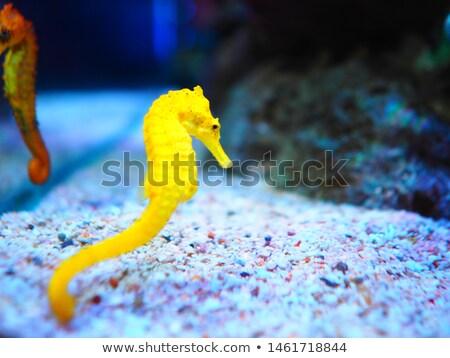 mitolojik · deniz · at · örnek · sanat · hayvanlar - stok fotoğraf © derocz