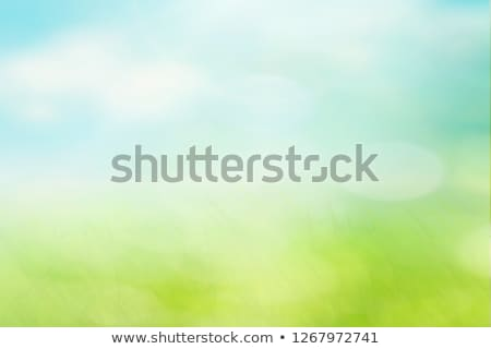 Absztrakt napos tavasz fű felhős égbolt Stock fotó © karandaev