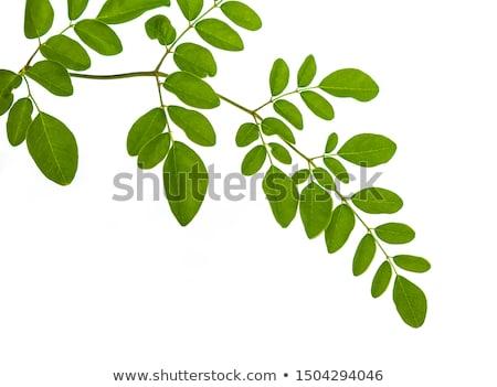 Comestível folhas verdes branco natureza verde vegetal Foto stock © bdspn