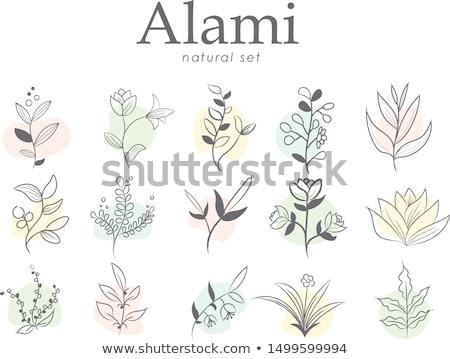 schoonheid · vector · bloemen · ontwerp · logo · sjabloon - stockfoto © krisdog