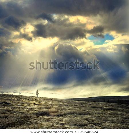 solitaire · arbre · domaine · ciel · bleu · nuages · vieux - photo stock © hraska