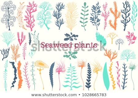 Marinha decorativo aquário ilustração verde alga Foto stock © robuart
