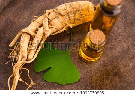 Ginseng wortel bladeren blad gezondheid leven Stockfoto © joannawnuk