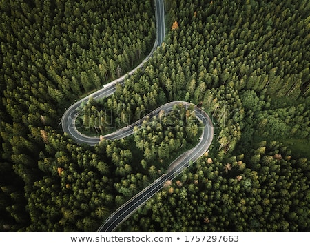 Top view of the winding road through the woods on a summer afternoon. Aerospace with a drone as a na Stock photo © artjazz