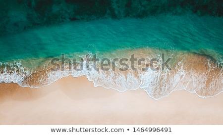 Tengerpart madarak labda tenger fák zöld Stock fotó © colematt