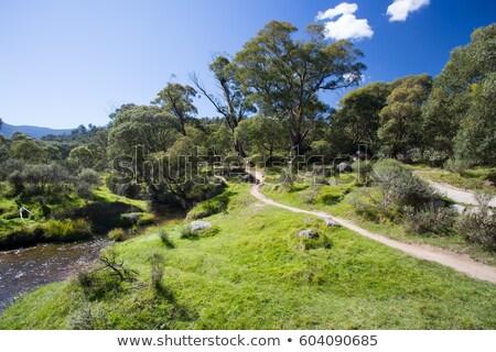 Eski kulübe park güneş ışığı dağlar dikkat Stok fotoğraf © lovleah