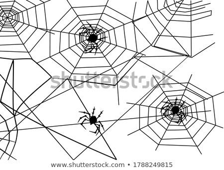 クモ フライ 引き裂か ウェブ クモの巣 シンボル ストックフォト © orensila