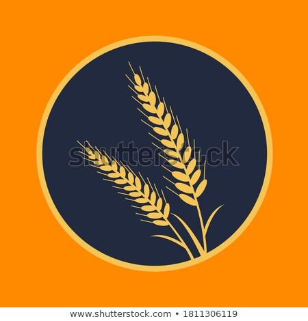 продукции белый продовольствие пшеницы завтрак Сток-фото © shamtor