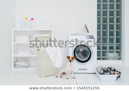 Pedigree dog poses in laundry room with washing machine and pile of dirty clothes in basket. Domesti Stock photo © vkstudio