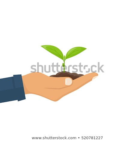 Hands of young male farmer or gardener holding leaf of garden plant Stock photo © pressmaster