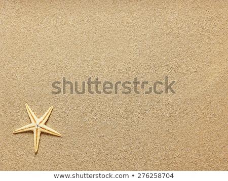 starfish and seashells on beach sand Stock photo © dolgachov