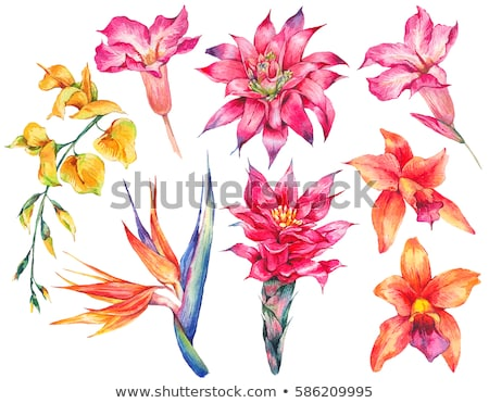 Color background with birds and flowers and label Stock photo © Elmiko