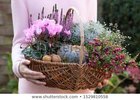 portre · kadın · bitki · pot · çiçek - stok fotoğraf © photography33
