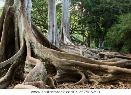 Jurassic Tree Roots Stock photo © backyardproductions