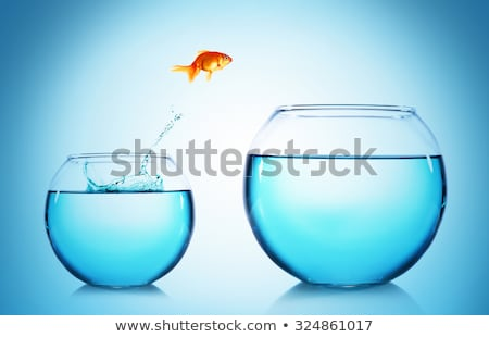 Stock photo: goldfish jumping out of the water
