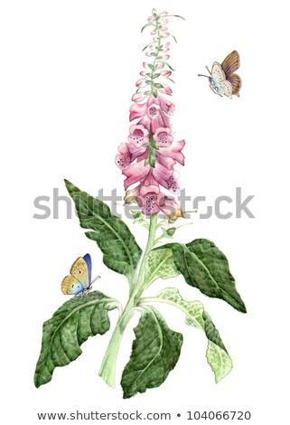 flores · rosa · blue · sky · droga · flor · jardinagem - foto stock © peterveiler