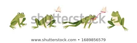 Cartoon · лягушка · лет · счастливым · дизайна · искусства - Сток-фото © indiwarm