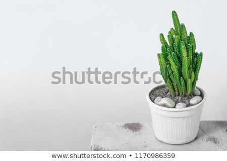 кактус цветочный горшок мнение зеленый квадратный Сток-фото © nailiaschwarz