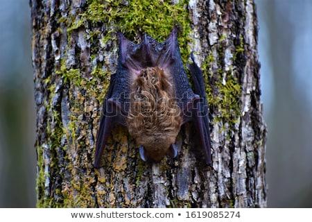 Stock photo: Bat Droppings