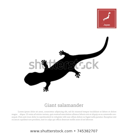 silhouette of newt stock photo © perysty