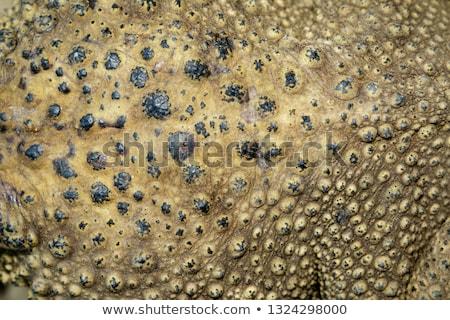 Sapo primer plano tiro pie textura ojo Foto stock © brianguest