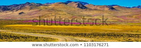 kleuren · Chili · jas · armen · kaart · vlag - stockfoto © perysty