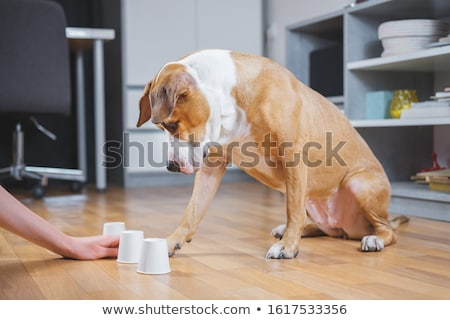 dog intelligence stock photo © lightsource