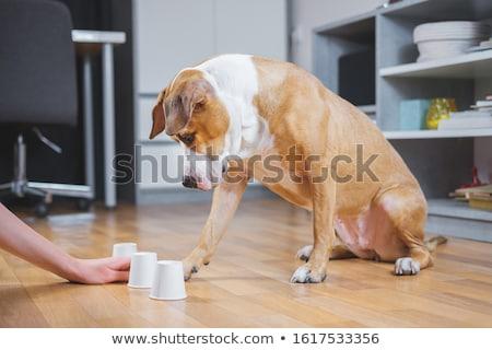 Сток-фото: Dog Intelligence