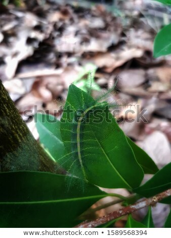 Chrysalis in a Rain forest tree stock photo © wildnerdpix