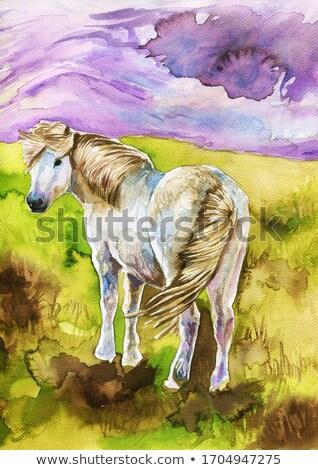 young pony Stock photo © saddako2
