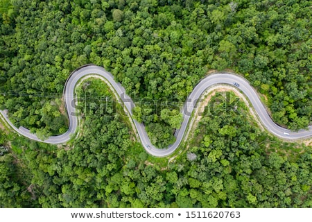 Curved road in a forrest Stock photo © Vividrange