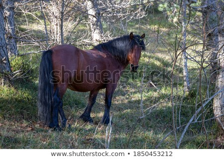 wild meadows in Liguria, Italy Stock photo © franky242